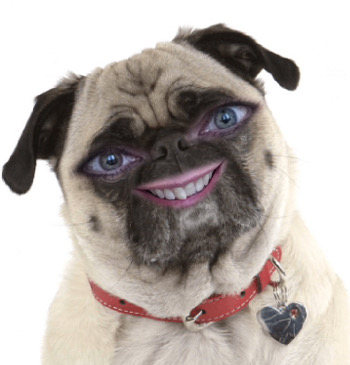 my eyes and mouth superimposed on the face of a pug dog